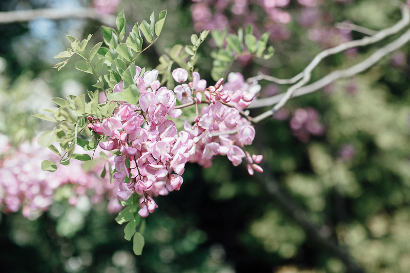martina-tomas-svadba-kosice-botanicka-zahrada-001