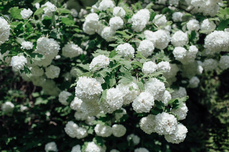 martina-tomas-svadba-kosice-botanicka-zahrada-002